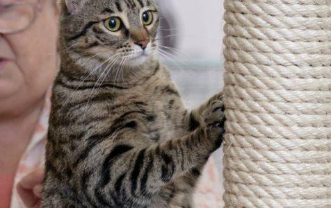 HUSSE kačių parodoje Klaipėdoje