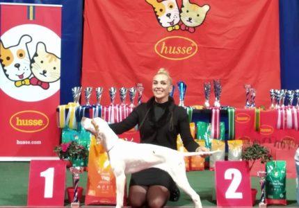 HUSSE šunų parodoje Panevėžyje.